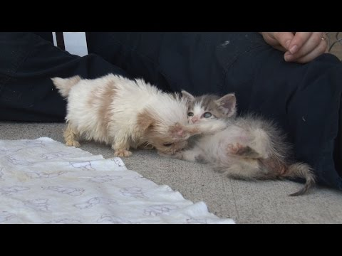 Adorable Rescue Puppy and Kitten are Best of Friends