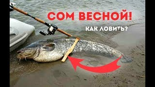 Все о рыбалка на спиннингом сома