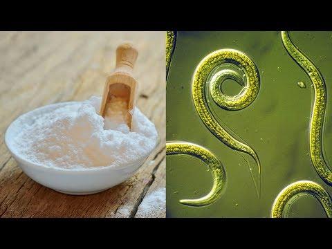 Народные средства от паразитов в организме ребенка