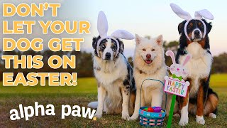 How To Keep Your Dog Safe On Easter