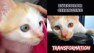 AMAZING EYECOLOR changing TIMELINE of my Kitten!!  👀