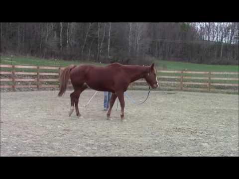 Equine Massage - Horse #3