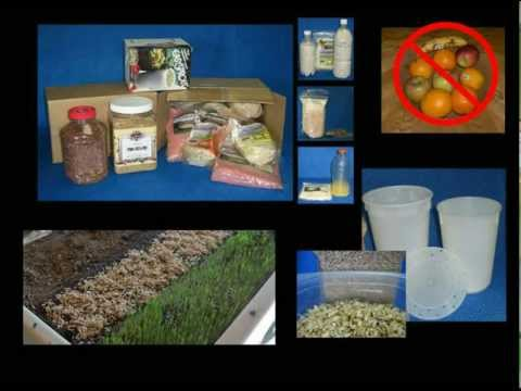 Long Term Food Storage for Health During and After Emergencies