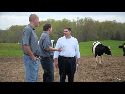 Dairy Cattle Nutrition & Cow Comfort