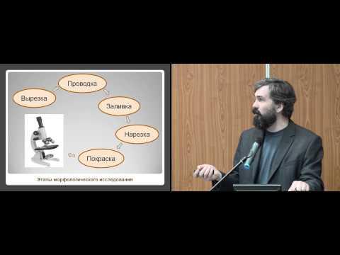 Методы лечения аденомы предстательной железы