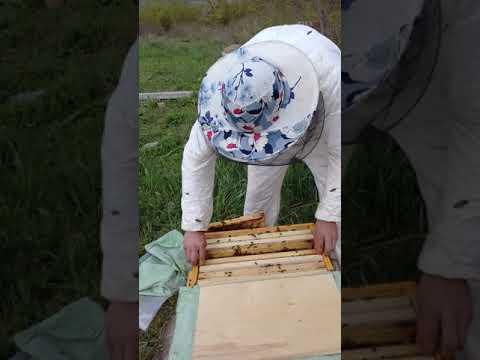 2х маточное пчеловодство  .осмотр