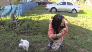 Оренэксп Шарлык Четверговый кот
