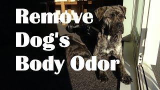 How to Remove Dog Odor. Help dog smell nice.