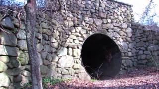 Hidden Cow Tunnel On Cape Cod
