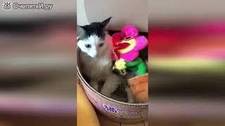 Смешное с кошками и котами