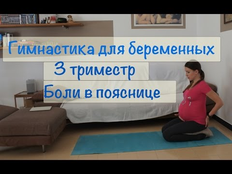 Синоним коленного сустава