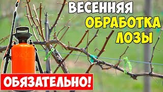 Опрыскивание винограда железным купоросом весной пропорция