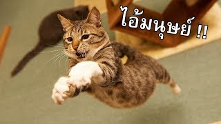 ''แมว'' คือเครื่องจักรทำลายบ้าน - dooclip.me
