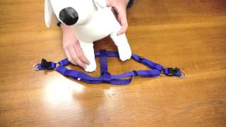 PetChampion - Step In Harness: How To