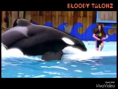 ❤In Memory of Keiko The Killer Whale / Free Willy❤