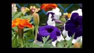 SUMMER(Music by. DNKL-Battles)
