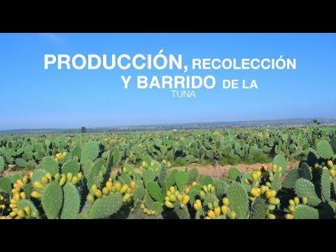 PRODUCCION  DE TUNAS