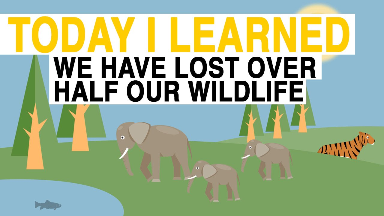 TIL: We Have Lost 50% of Wildlife Since 1970 | Today I Learned thumbnail