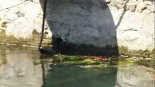 preview picture of video 'Folaghe a Porto Valtravaglia'