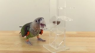 Parrot Foraging Tower Trick