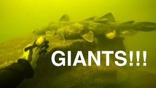 River Treasure: GIANT Catfish Edition!!! - Video Youtube