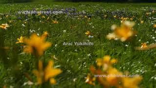 大江湿原の動画素材, 4K写真素材