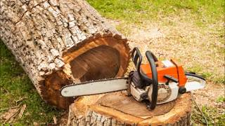The Adelaide Tree Surgery - Arborist Reports In Adelaide