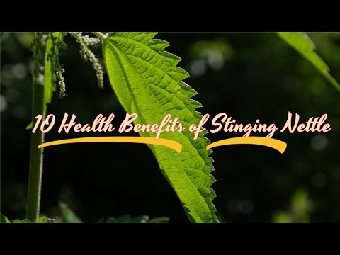 Video 10 Health Benefits of Stinging Nettle | Useful info