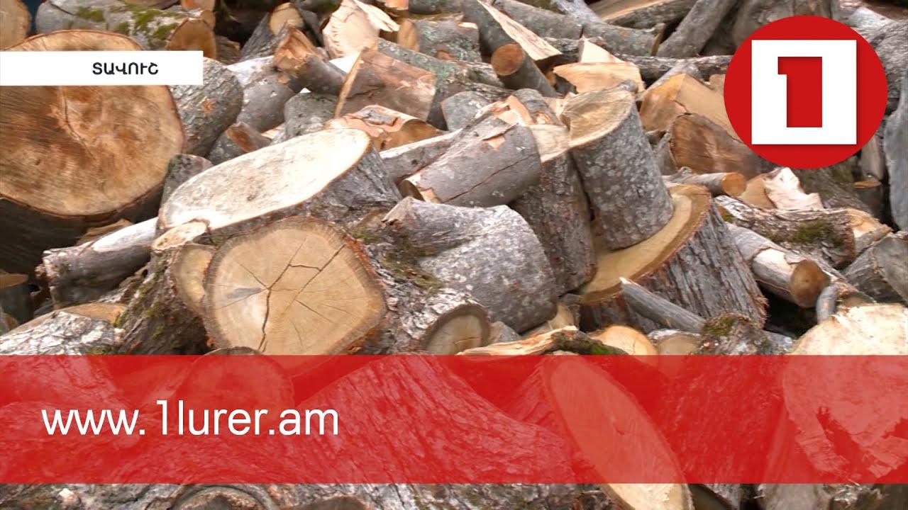 ՀՀ անտառները վտանգված են. 2020-ի վնասը շուրջ 815 մլն դրամ է, մեղադրյալ են նաև անտառապետները