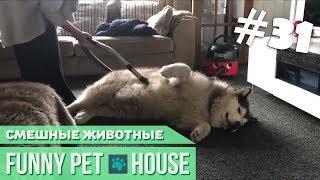 СМЕШНЫЕ ЖИВОТНЫЕ И ПИТОМЦЫ #31 ФЕВРАЛЬ 2019 [Funny Pet House] Смешные животные