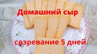 Домашний сыр со вкусом топленого молока Самый быстрый твердый сыр из козиного молока