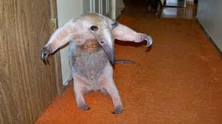 UNUSUAL PETS are so SUPER FUNNY & CUTE - Are you ready to SCREAM WITH LAUGHTER?