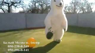 танцующий белый медведь видео