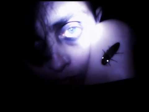 Lightning Bug - Escarlatina Obsessiva