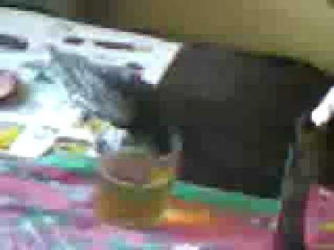 La codificazione da alcolismo in una clinica