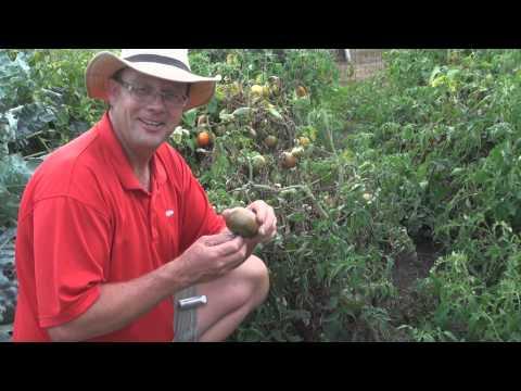 , title : 'Cherokee Purple Tomato