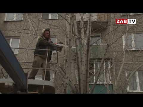 После сюжета ЗабТВ в Чите обнулили порубочные билеты