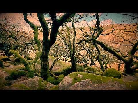Devon's Creepiest Woodland: Wistman's Woods On Dartmoor