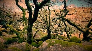 Devon's Creepiest Woodland: Wistman's Woods On Dartmoor
