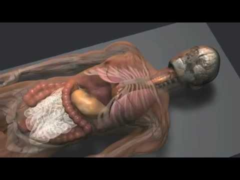 Akut prosztatitis ICD