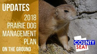 How Prairie Dogs are Caught