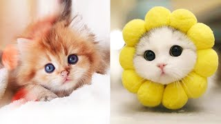 Baby Cats - Cute and Funny Cat Videos Compilation #32   Aww Animals