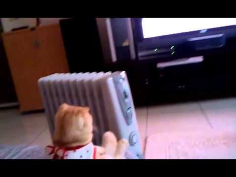 CAT SITS LIKE A HUMAN AND WATCHES TV