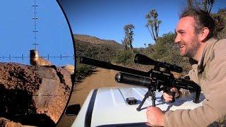 Long Range Dassie Hunting at Witmoskloof Farm