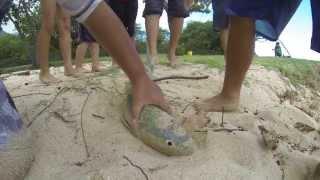 "HKD 13 ""The Return"" Spearfishing Hawaii"