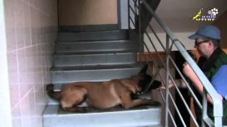 Смотреть онлайн Основы дрессировки собак в домашних условиях