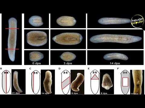 Humán papilloma vírus fertőzés nedir