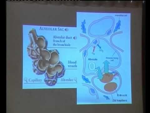 Invaliditet rizik od hipertenzije stupnja 2 3