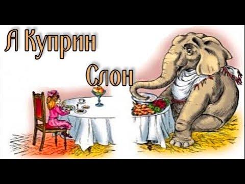 А Куприн Слон
