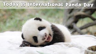 Today Is International Panda Day! | iPanda